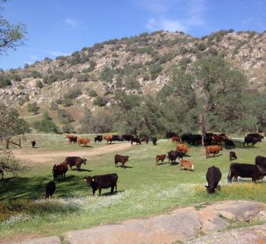 ranch_2